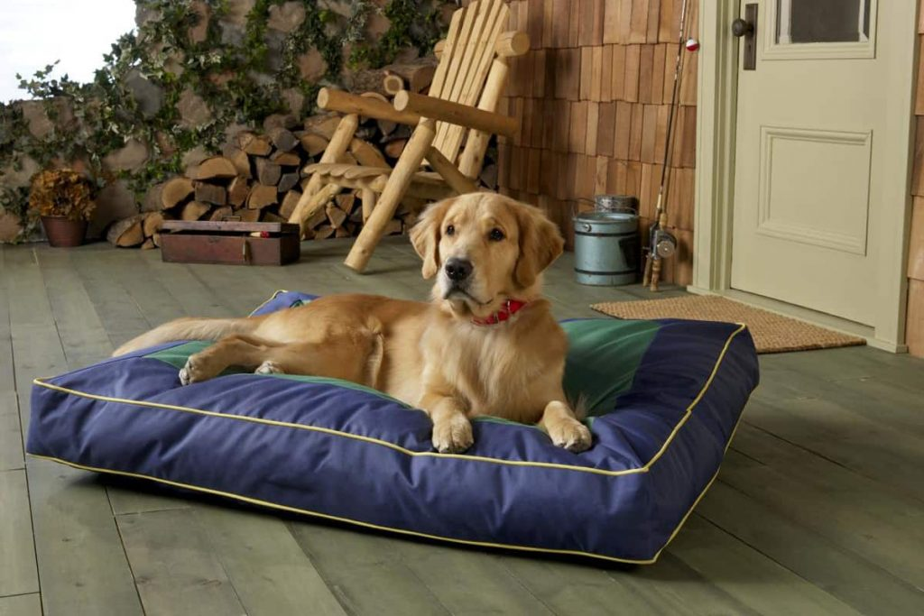golden retriever lying on a dog bed