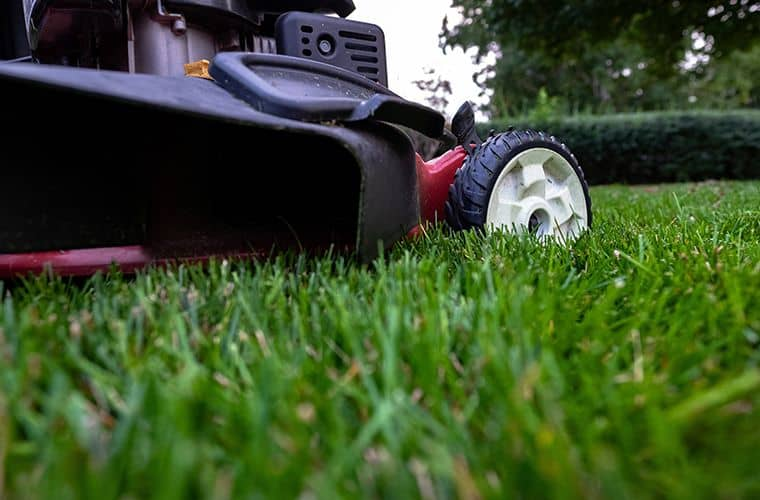 fresh-cut-grass-and-mower